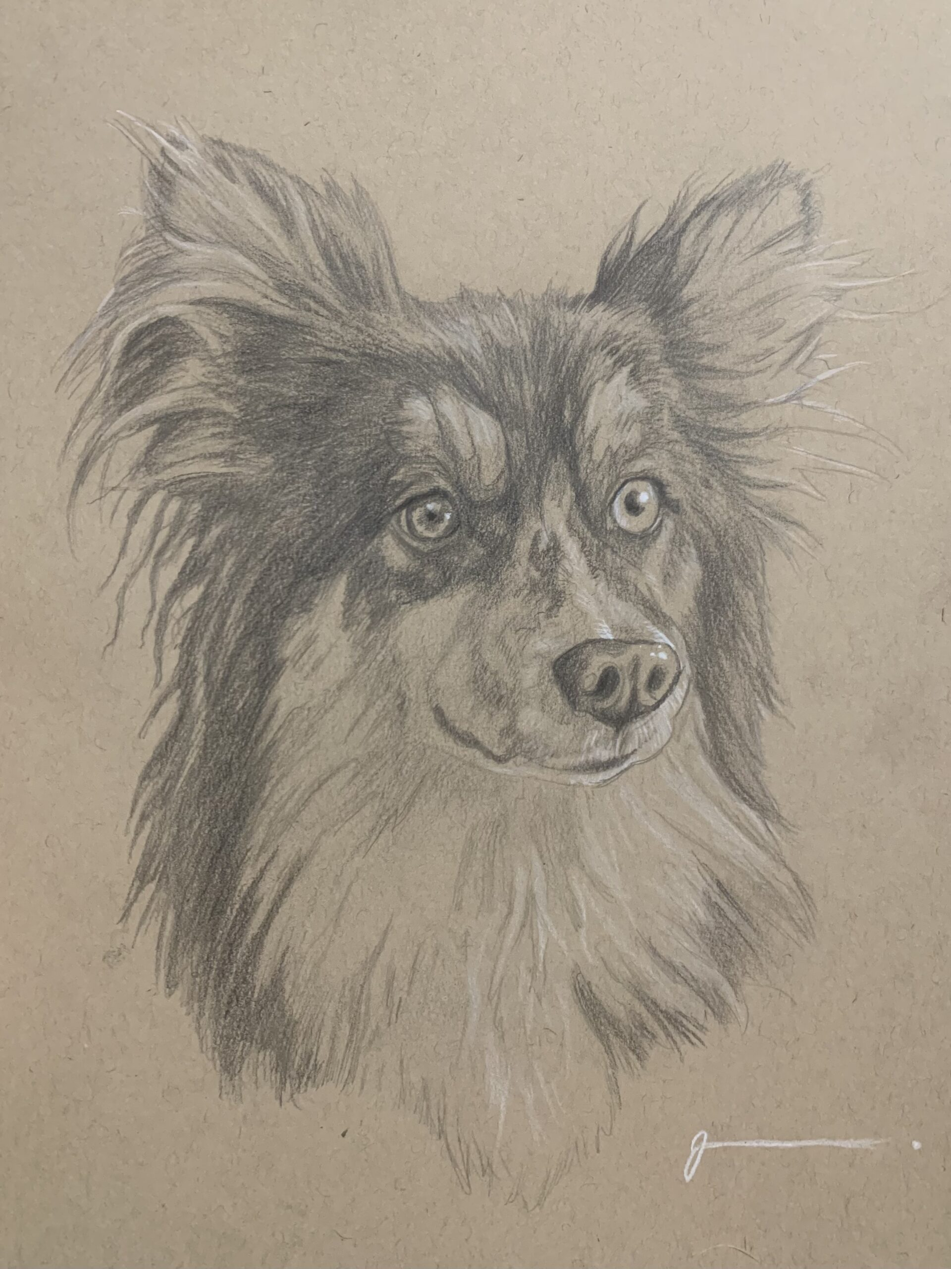 Pet Portrait by Josh
